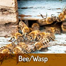 Bee Wasp Pest Control Tampa