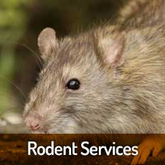 Rodent-Services