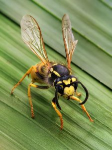 How to Get Rid of Wasps in Your Home
