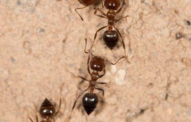 Pest Control Means Ants Control