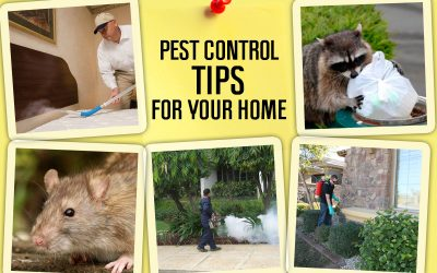 Pest Control Tips: How To Keep Pests Out
